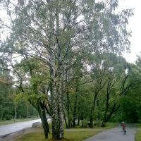 ЗЕЛЕНОГОРСК. Дождливая дорога. / Zelenogorsk. Rainy road., Зеленогорск