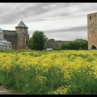 Ивангородская крепость: Успенский собор и Никольская церковь, Ивангород