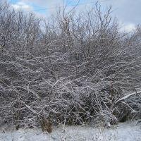 Первый снег  3 (19.11.2008г), Кингисепп