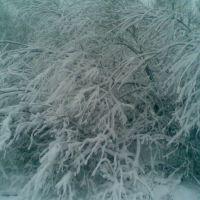 19.11.2007. г.Кингисепп .  Куст в снегу, Кингисепп