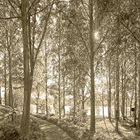 Кириши, в прибрежном парке., Кириши
