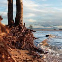 Деревья в воде (trees and water), Лисий Нос