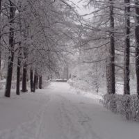 Зима 2009-2010, Лодейное Поле