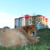 Наш дом и наша чава Барби на фоне нём..., Ломоносов
