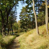 Ораниенбаумский парк: Осенняя дорожка вдоль Нижнего пруда, Ломоносов