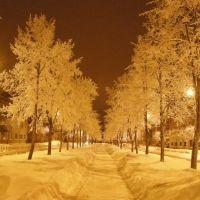 Зимние липы на улице Победы, Ломоносов