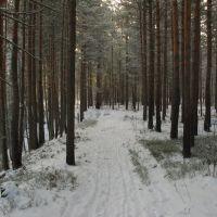 Лесная дорога, Луга