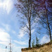 Birch cape 2, Парголово