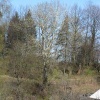 дерево, Парголово