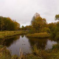 Вид с Заячьего проспекта на южный край Английского пруда. Октябрь, Петродворец