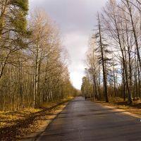 Заячий проспект в ноябре., Петродворец