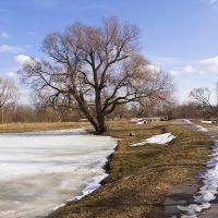 Никольский пруд в конце весны., Петродворец