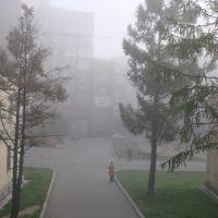 23 квартал из окна, Петродворец
