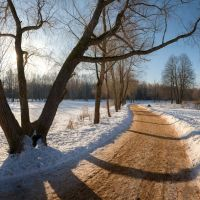 Парковая дорожка, Петродворец