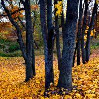 Петергоф, город Санкт-Петербург. Золотая осень в Английском парке., Петродворец