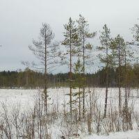 Зимнее болотце, Подпорожье