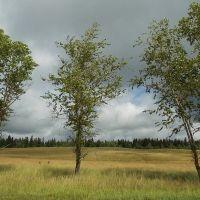 Деревья и луга, Подпорожье