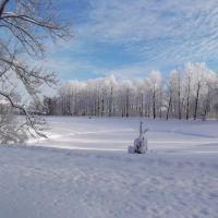 Tzarskoe selo. Catherines park., Пушкин
