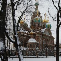 The Church of the Savior on Blood. A view from Mikhajlovskij garden., Санкт-Петербург