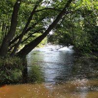 Вода бежит под сенью древ... Water runs under the canopy of trees, Сестрорецк