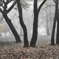 Танец в тумане, Сестрорецк