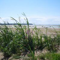 Beach and  Flowers, Salicaria Lythrum., Сестрорецк