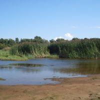Green Beach., Сестрорецк