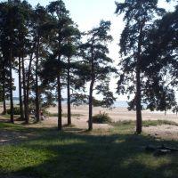 Trees and Dune., Сестрорецк