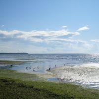 Green beach and Birds., Сестрорецк