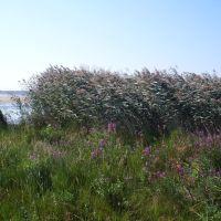 Beach, Grass and Flowers..., Сестрорецк