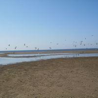 Beach Birds., Сестрорецк