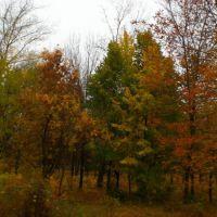 Осень в городском парке, Балаково