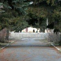 Еловая аллея в парке Куйбышева. Поздняя осень., Балашов