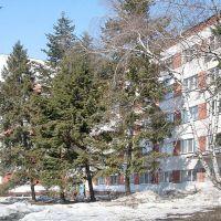 Ели у общежития пединститута, Балашов