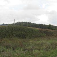 Вид на лес, Балтай