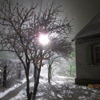 Зимний сад, Возрождение