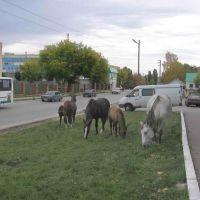 Komsomolskaya Str., Вольск