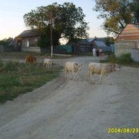 Selo, Воскресенское
