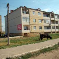 Новый дом, Красный Кут