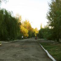 Проспект, Красный Кут