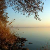 Mirror of water keeps silence, and the elm is flowering... . Spring on Volga., Ровное