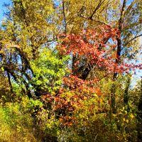 Amazing autumn, Самойловка