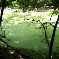 Старое русло реки Терсы летом / The Tersas river old riverbed at summer, Самойловка
