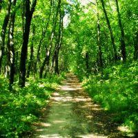 Летний солнечный лес / Sunny forest, Самойловка