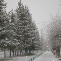 Зима, зима..., Степное