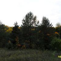 Осенняя сказка, Хвалынск
