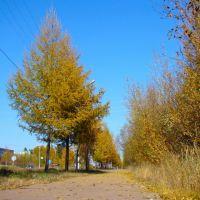 Осень. Тротуар, Нерюнгри