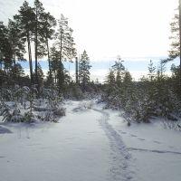 первый снег в лесочке, Нерюнгри