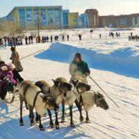 На Празднике народов севера - катание на оленях., Новый Уренгой
