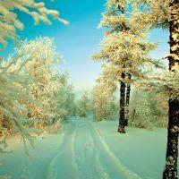 В лесу., Новый Уренгой
